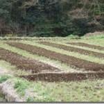 苗代作りと種まき