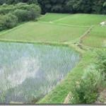 田んぼのコロガシ