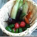 夏野菜2011