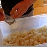 米麹作り2014