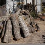 クヌギの薪