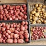 ジャガイモと野沢菜