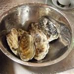 藻琴の牡蠣