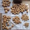 ジャガイモとタマネギの収穫