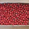 トマトとウメ