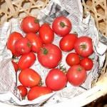 いまだにトマト